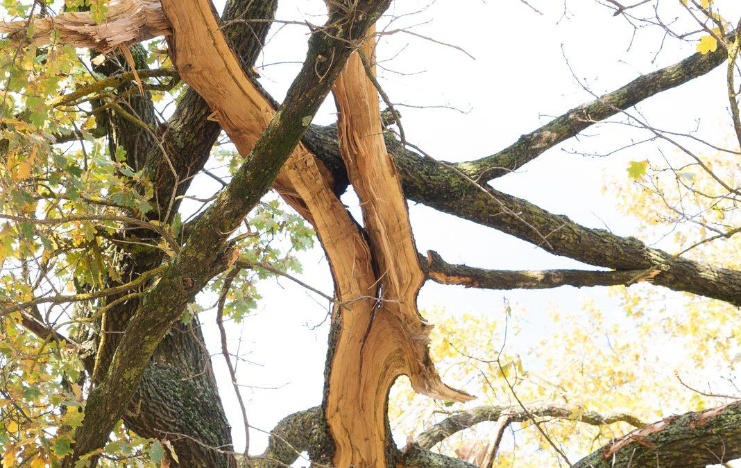 Lightning Strike Smashes Tree at Rec Reserve – Images