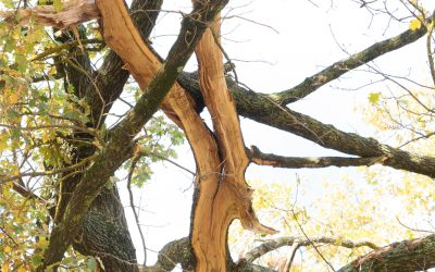 Lightning Strike Smashes Tree at Rec Reserve – Images