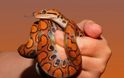 35 Seriously Superb Photographs Of Snakes