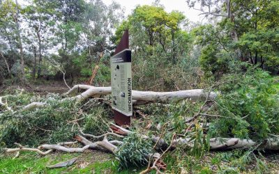 Fallen Trees Cause Damage and Obstruction to Pathways at Wetlands